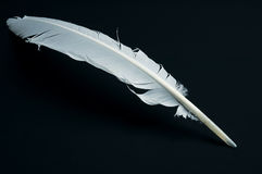 Quill. White quill for hand writing Stock Photo