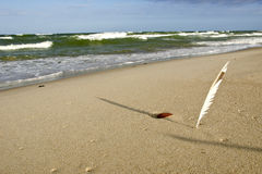 Quill planted into coastal sea sand and its shadow Royalty Free Stock Photo