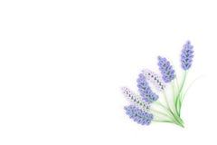 Quilling de papel, flores de papel coloridas Fotografia de Stock
