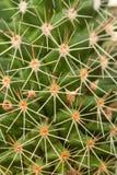 Quills и шиповатые позвоночники кактуса Стоковая Фотография
