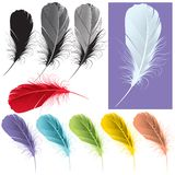 Quills. Variety style and color quill illustration Stock Images