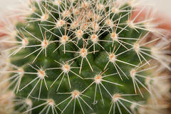 Quills and prickly cactus spines Stock Photography