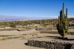 Quilmes ruins. Ancient civilizations left prosperous cities in the provinces of northwestern Argentina, now in ruins Stock Images