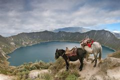 Quilotoa crater lake. Surrounded by highland indigeneus communities and their mules used for returning the tourists from the lake shore to the crater rim Royalty Free Stock Image