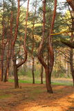 Quimeras na floresta Imagem de Stock