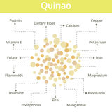 Quinao nutrient of facts and health benefits, info graphic Royalty Free Stock Photo