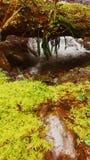 Quinault стоковые изображения
