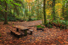 Quinault Park Royalty Free Stock Photo