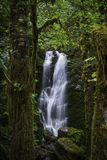 Quinault Rainforestvattenfall royaltyfri fotografi