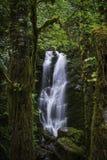 Quinault tropikalnego lasu deszczowego siklawa fotografia royalty free