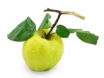 Quince äpplequince, äpple Royaltyfria Bilder
