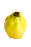 Quince Royalty Free Stock Images