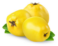 Quince. Isolated quince. Three yellow quince fruits isolated on white background royalty free stock photography