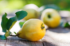 Quince. On wooden board outdoor royalty free stock image