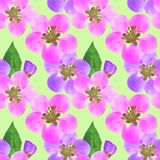Quince, apple quince. Seamless pattern texture of flowers. Flora. Quince, apple quince. Texture of flowers. Seamless pattern for continuous replicate. Floral stock illustration