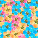 Quince, apple quince. Seamless pattern texture of flowers. Quince, apple quince. Texture of flowers. Seamless pattern for continuous replicate. Floral stock illustration