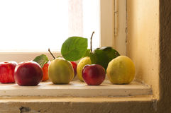Quince and apples on the window sill Stock Photography