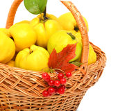 Quince in the basket isolated Stock Photos
