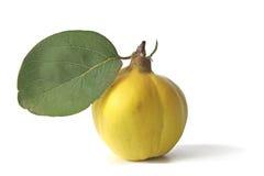 Quince (Cydonia oblonga) Stock Image
