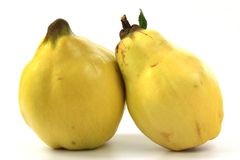 Quince (Cydonia oblonga) Royalty Free Stock Photos