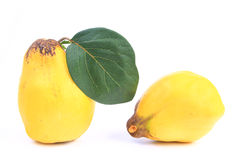 Quince (Cydonia oblonga) Stock Photography