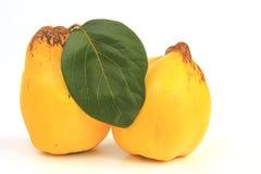 Quince (Cydonia oblonga) Royalty Free Stock Image
