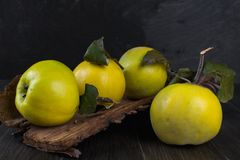 Quince on dark wooden background. Autumn fruits Stock Photos