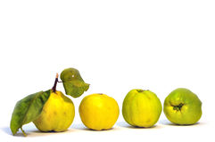 Quince fruit. Four ripe quince fruit on white background Royalty Free Stock Photo