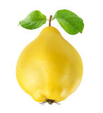 Quince Stock Image