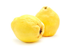 Quince Stock Photo