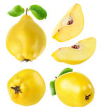 Quince fruits collection. Quince fruits whole and cut collection isolated on white with clipping path royalty free stock image