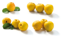 Quince fruits Stock Images