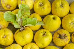 Quince fruits. On wooden background Royalty Free Stock Photos