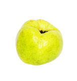 Quince (golden apple) Royalty Free Stock Photos