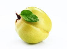 Quince   isolated white background. Fresh quince   isolated white background Royalty Free Stock Photo