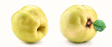 Quince isolated white background. Fresh yellow quince isolated white background Royalty Free Stock Photo