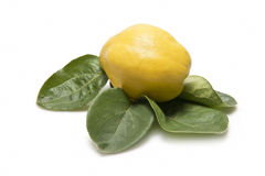 Quince with leaves Stock Photo