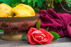 Quince in old indian vase and red fragrant rose Stock Photography