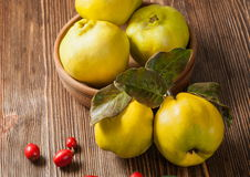Quince. On vintage wooden background royalty free stock photos