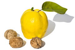 Quince and walnuts on white background. Quince and three walnuts on white background Stock Photos