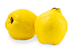 Quince on a white background Royalty Free Stock Photos