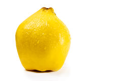 Quince on a white background Royalty Free Stock Photography