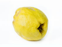 Quince. On white background Royalty Free Stock Image