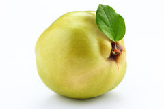 Quince on white background Stock Photos
