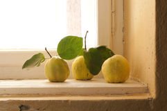 Quince on the window sill Royalty Free Stock Image