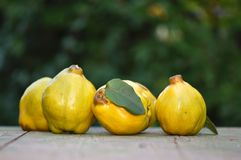 Quince. On wooden board outdoor Stock Images