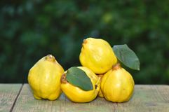 Quince. On wooden board outdoor Stock Photos