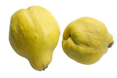 Quinces Royalty Free Stock Image