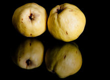Quinces. Two whole quince fruit isolated on a reflective black background Stock Images
