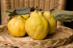 Quinces Stock Photo